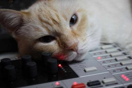 orange and white cat with blue eyes resting head on top of drum machine looking into camera