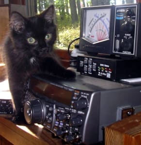 black kitten with one paw on top of stereo
