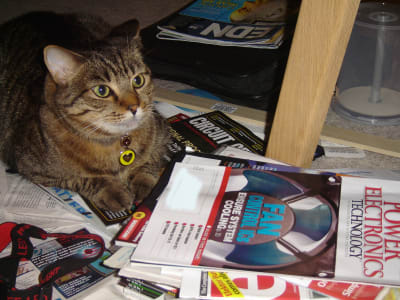 tabby cat sitting under desk on top of multiple spread out engineering magazines