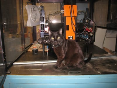black cat sitting on top of light blue pick and place machine