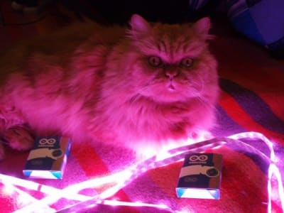 wide eyed cat sitting in front of pink LED light illuminating room
