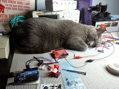 A grey cat snoozes among circuit boards, oscilloscopes, pliers and more on a workstation