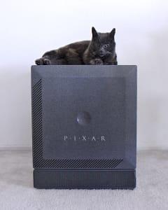 grey cat sitting on top of grey vintage computer