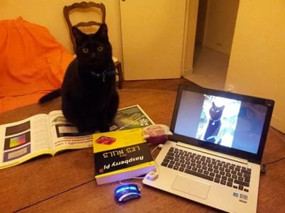 black cat sitting on top of open workbook next to an open laptop photo of same black cat as desktop wallpaper