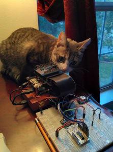 orange and white kitten sitting on top of black radio