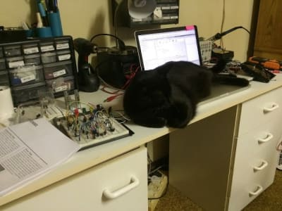 black cat sprawled out on top of computer on white desk