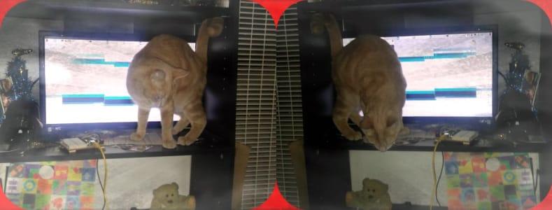 Image 1: a cat prowls a shelf, a teddy bear sits on shelf below 2: the cat peers at the teddy bear
