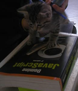 Tiny cute kitten looking befuddled, held over a textbook: Domine Javascript 3rd edicion