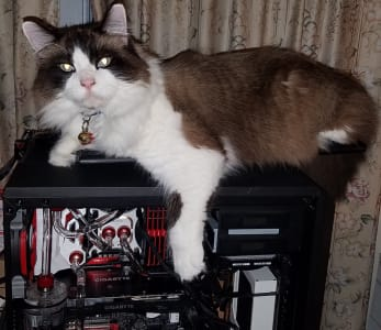 A brown and white cat chills out on top of an open DIY desktop, cooling system exposed