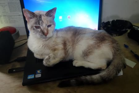 A sleepy white and grey cat lying on a laptop
