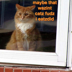 A suprised-looking longhaired orange cat looking out a window with the caption: maybe that wazint catz fudz i eatzdid