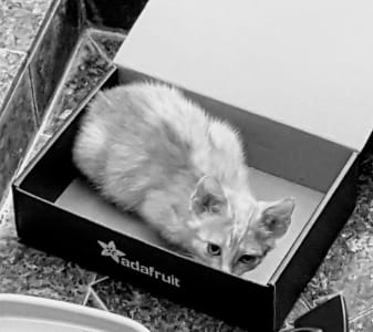 Black and white image of a kitten hiding in a black Adafruit box