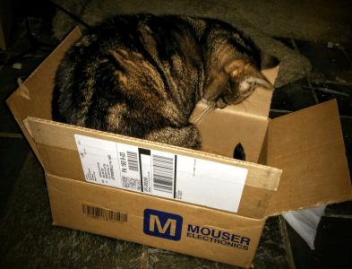 A brown tabby sitting in a Mouser shipping box