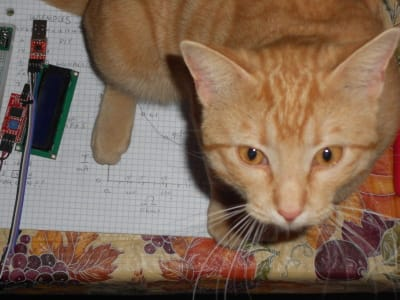An orange tabby sitting on graph paper looks up at the camera