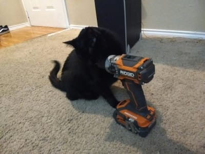 A black cat sniffs an orange and grey power drill
