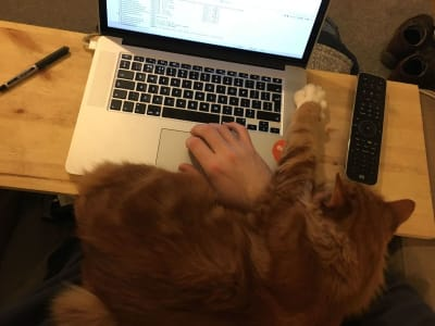 A longhaired orange cat has their paw on a laptop, reaching out over a person's typing hand