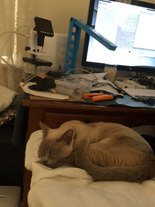 A brown shaded cat sleeps on a white blanket in front of a workstation