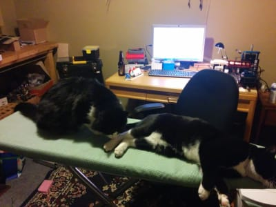 On an ironing board, one tuxedo cat sniffs the paw of another tuxedo cat