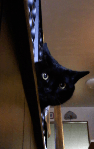 A black cat peeks out through the metal railing, looking down at the camera