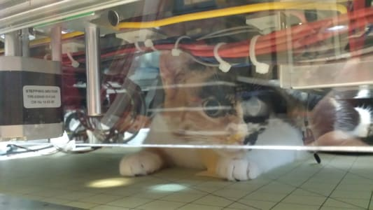 A calico cat crouched underneath a wired machine looks out through clear plastic