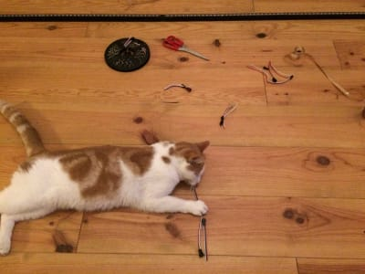 An orange and white cat plays with LEDs on the floor