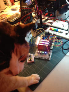 Close-up of a calico cat -- in the background, a breadboards with illuminated LED, wires, buttons, and other electonics