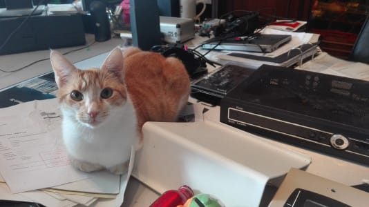 An orange and white cat sits on a table that is scattered with papers and equipment.