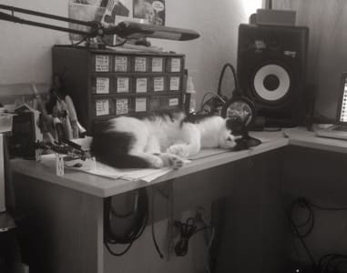A cat sleeps on a desk with papers, storage containers and a speaker.