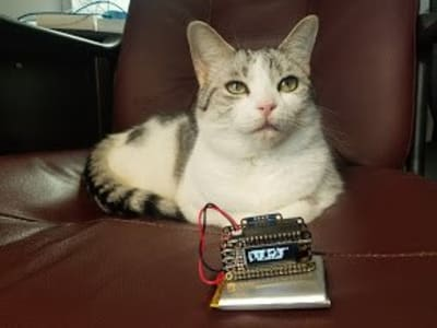 A white cat with brown spots sits on a brown leather chair. In front of the cat there is a lithium battery powered feather project. A small OLED screen on the project displays text.
