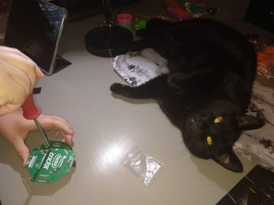 A black cat lays on its side, there is some Adafruit packing material peaking out from under the cat. To the left a pair of hands works on a CRICKIT with a screwdriver.