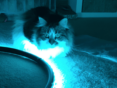 A pensive fluffy cat is bathed in blue light from a NeoPixel. The cat is sitting on a carpet with the led snaking past towards the front.
