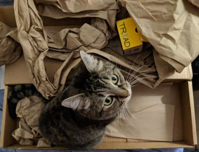 A brown tabby is sitting in a box staring up at the camera. There is brown packing paper strewn about.