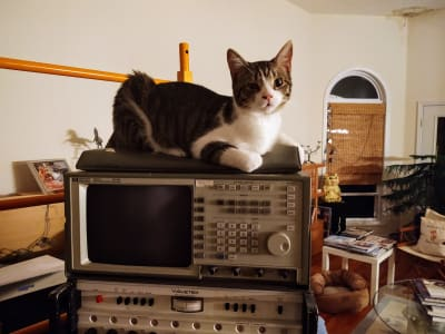A brown and white cat lies attentively on a powered off oscilloscope