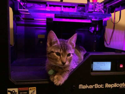 A tabby kitten perched inside a black 3D printer illuminated by purple light