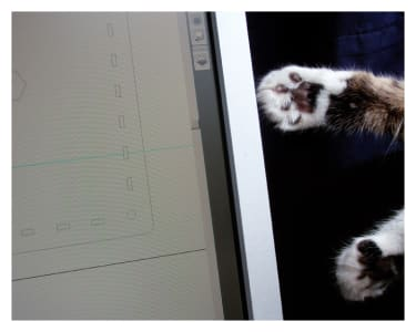 Two paws reach out for a computer screen.