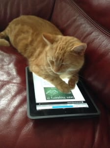Cozy orange tabby snoozes, with its paws over an iPad on this page: Learn Raspberry Pi