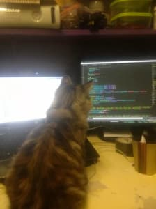 The back of a grey and cat's head is shown as it looks at a computer screen