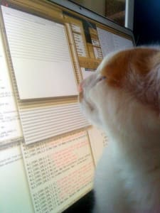 Face of white and orange cat staring up close at a computer screen