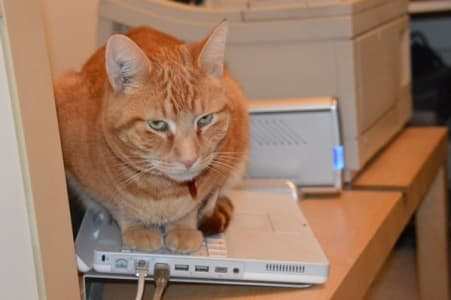 Orange cat rests on top of laptop keybaord