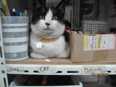 White and black cat sits on shelf in between a cup of pencils and a cardboard box