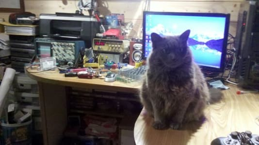 Fluffy grey cat sits on top of desktop workspace