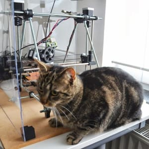 Black and orange cat perches in front of large setup of electronic equipment