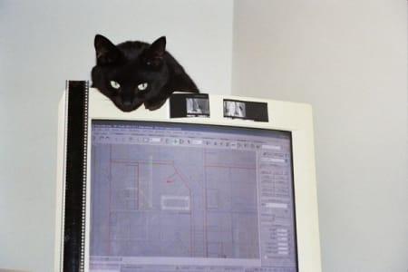 black cat peeks over computer screen