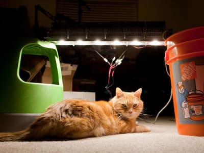 Orange cat rests under white led strip that's powered on