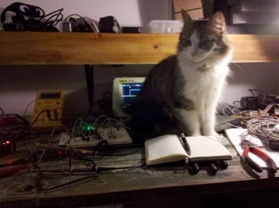 Grey and white cat perches on workshop desk behind a notebook and his surrounded by many tools