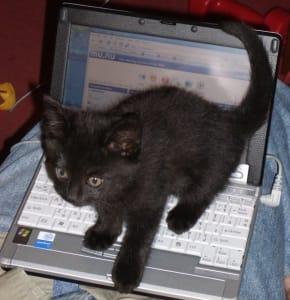 Black kitten stands on top of laptop keyboard