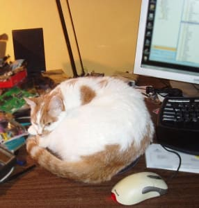 White and orange cat curls up on computer desktop.