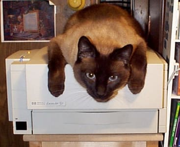 Siamese cat lounges on top of printer