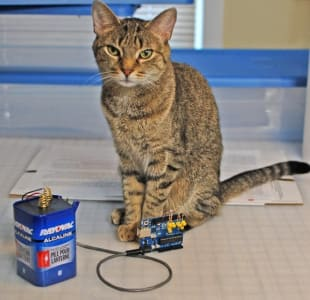 grey cat with green eyes perches behind an arduino
