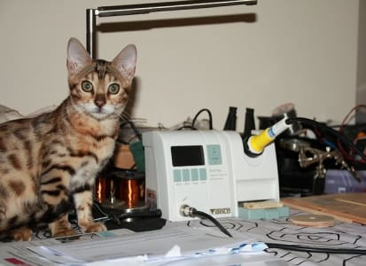 bengal cat seated next to solder station quizzically looking at camera.